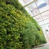 Metro Office 1 Pared Vegetal