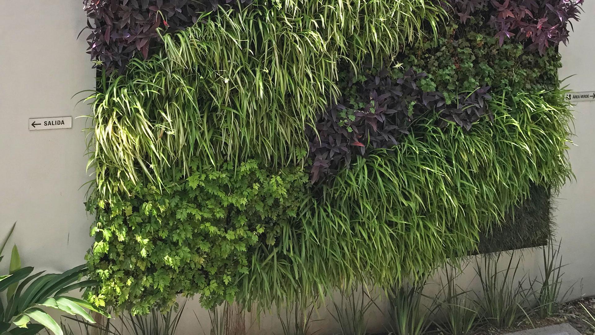 Jard n vertical en casa particular artevegetalartevegetal - Jardin vertical en casa ...